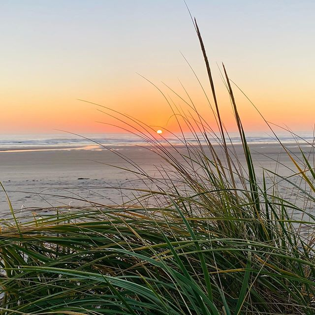 Dune grass and sunrise over the ocean